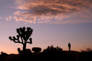 Award-winning photo of Jeff at Sunset, Joshua Tree National Park