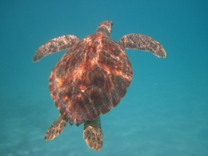 Amazing VINP snorkeling