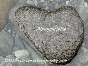 Heart rock in Redwood National Park