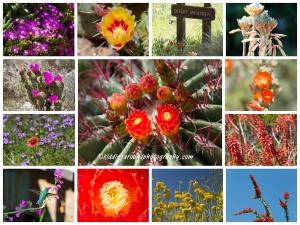 Boyce Arboretum