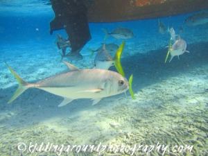 Belize Hol Chan Shark Ray Alley