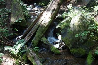 Little waterfalls in the stream