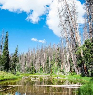 Cedar Breaks alpine pond