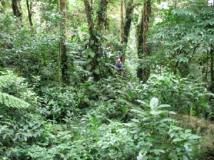 Ziplining at Selvatura, Monteverde, cCsta Rica