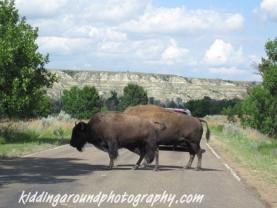 Teddy Roosevelt National Park
