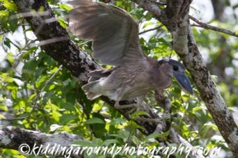 birding Belize