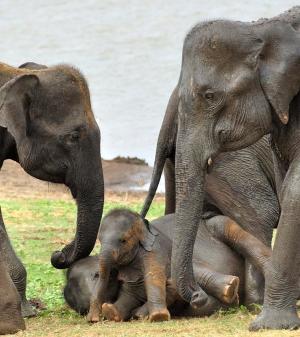 Elephants at Uda Walawe National Park