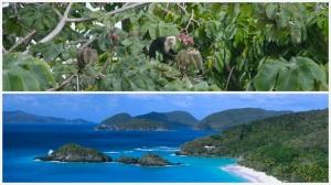 Costa Rica USVI