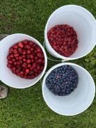 Hood Rvier Fruit Loop