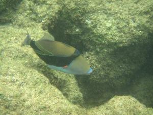 Kauia snorkeling
