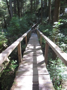 Cape Alava trail