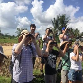 Birding in Bali