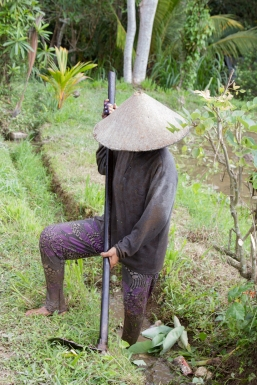 Traditional farming