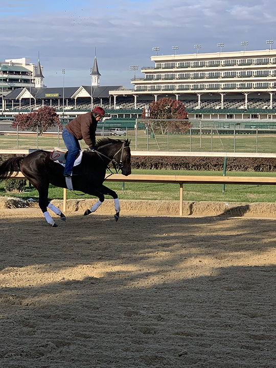 Churchill Downs horse